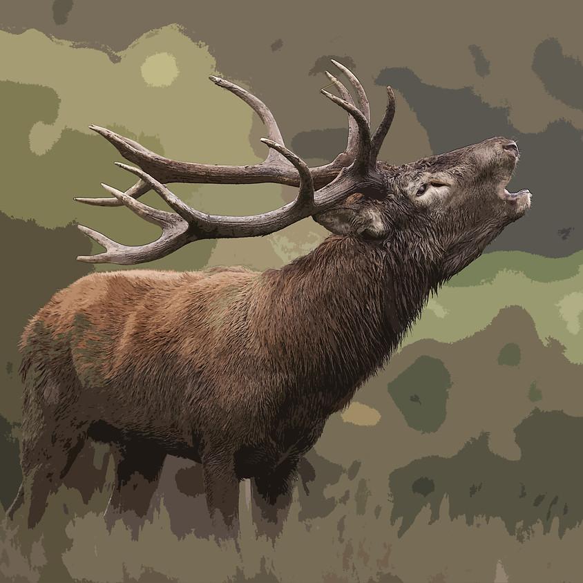 Caccia al Cervo Rosso al Bramito  con soli 19,99 €