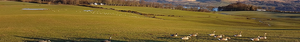 red grouse Caccia in Scozia - assolabeccaccia