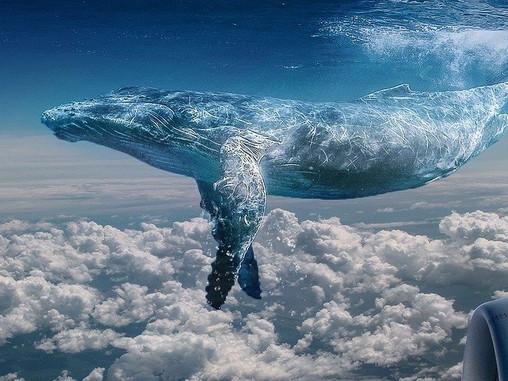 A bálna, mint spirituális lény