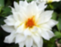 white flower_edited.jpg