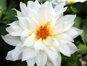 white flower_edited.jpg