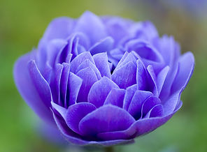 blue flower_edited.jpg