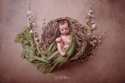 Braun Grün Baby im Körbchen