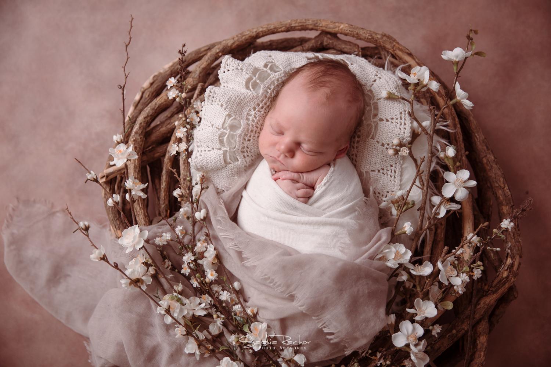Blüten Baby