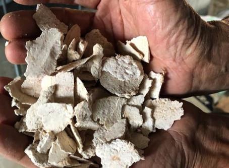 Supherb Ingredient Story 3 - Poria Cocos