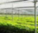 All-Natural Farm