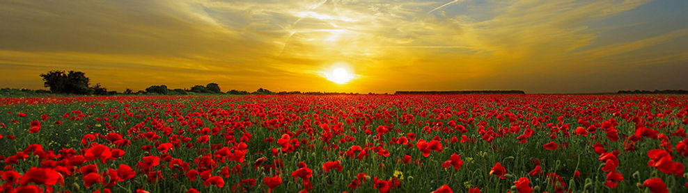 sun rising over poppy field.jpg