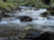 rushing stream tricycle mindfulness.jpg