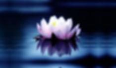 blooming lotus flower.jpeg