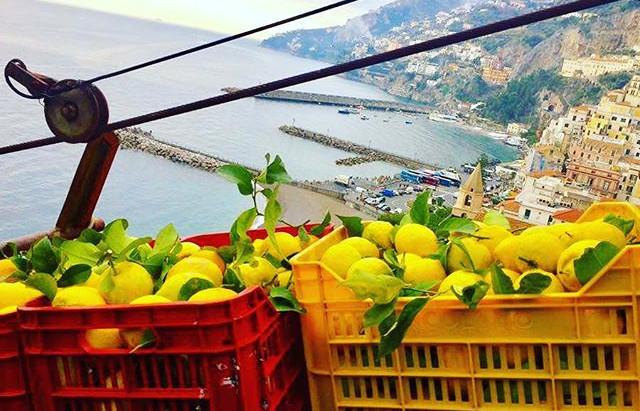 O Limão da Costa Amalfitana