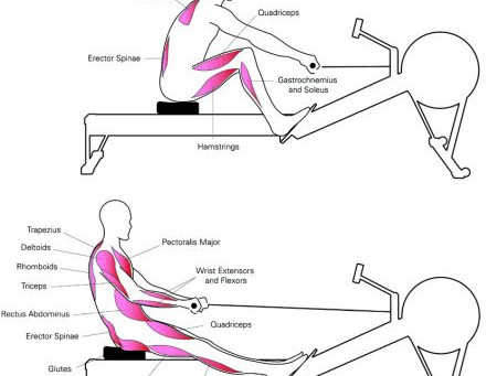 Arching and Curling … and ROWING