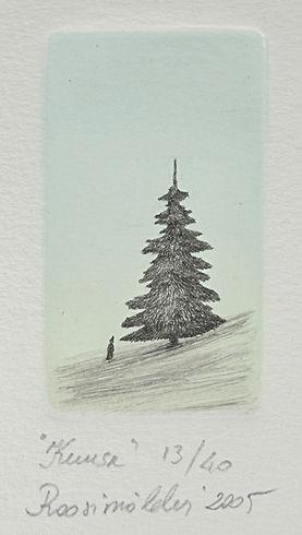 kuusu (もみの木).JPG