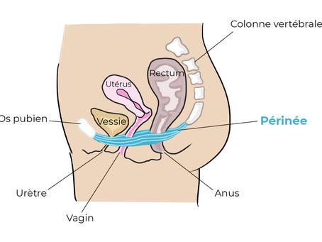 Grossesse, accouchement, post-partum ... le périnée, un muscle clé !
