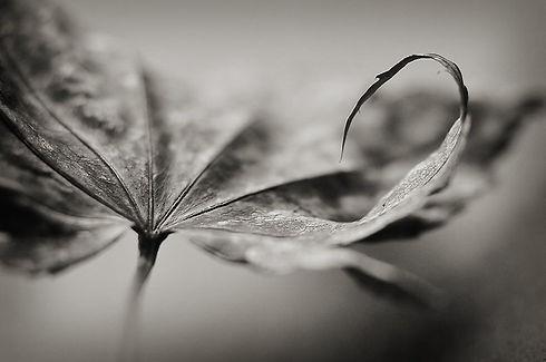 Leaf v2.jpg