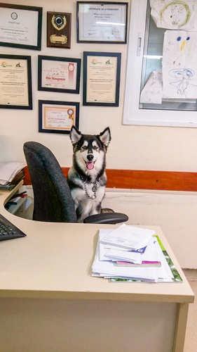 כלב בכסא רופא.jpg