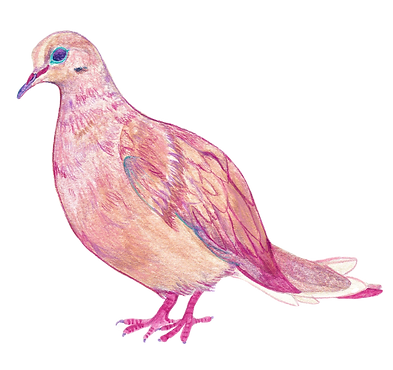 Pink Dove_edited.png
