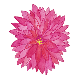 Pink Dahlia_edited.png