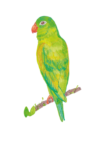 Parakeet_edited.png