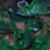 Mossy Ledge.jpg