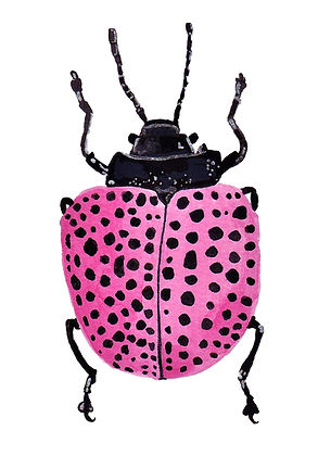 Ladybug, Pink Art, A note to say Hello