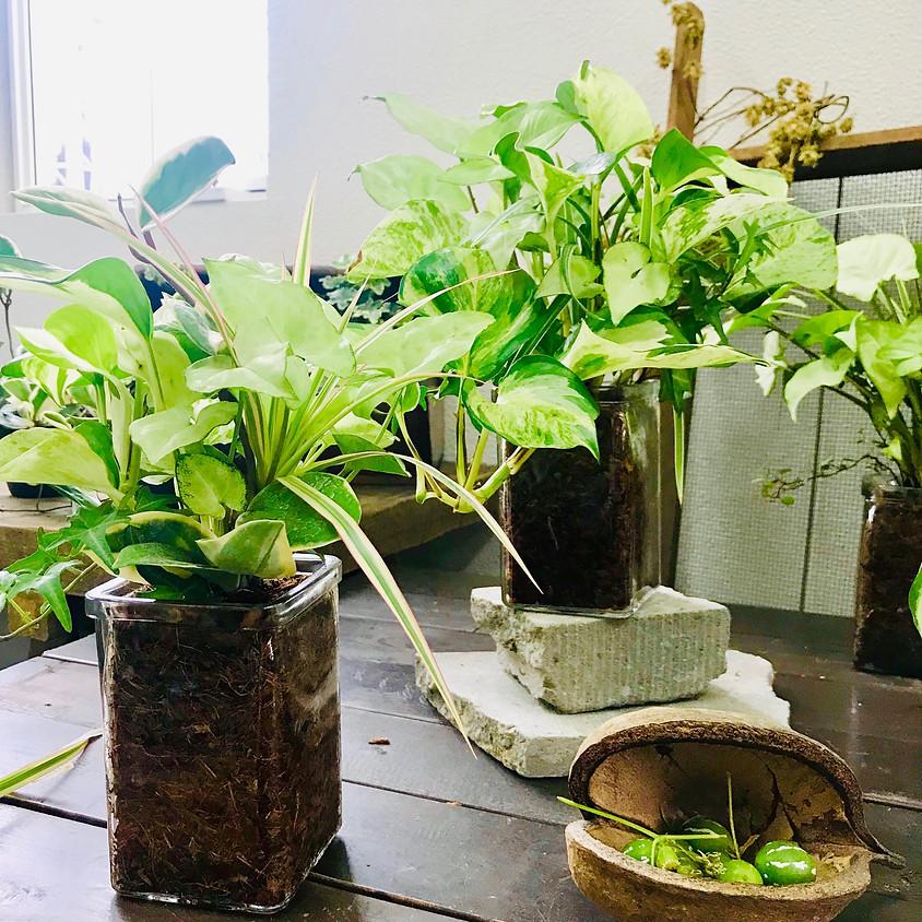 プランツギャザリング Lesson!「 観葉植物のギャザリング 」