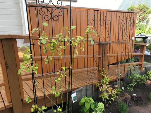南区 個人宅-お庭のメンテナンス.JPG