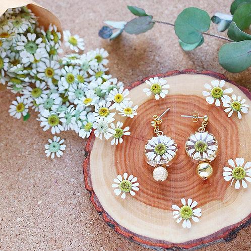 Real daisy earrings