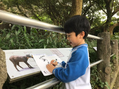 K zoo trip: student inquiring into his chosen animal's appearance