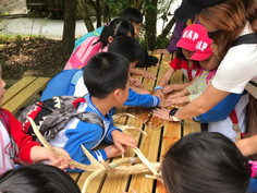 K zoo trip: observing animal skin texture and body parts