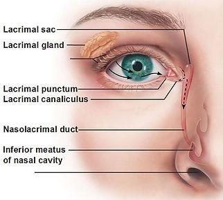παιδοφθαλμίατρος, στραβισμος, στραβισμός, stravismos, παιδοφθαλμιατρος, παιδοοφθαλμίατρος ιωάννινα, οφθαλμιατρος για παιδια, οφθαλμιατρος γιαννενα, οφθαλμιατρος πατρα, θεραπεια στραβισμου, Μελέτη στραβισμού, Αντιμετώπιση Διπλωπίας, Χειρουργική Στραβισμού, Δακρύρροια στα παιδιά, Αμφιβληστροειδοπάθεια Προωρότητας, διαλείπον στραβισμός, εσωτροπία, συγκλίνων στραβισμός, εξωτροπία, αποκλίνων στραβισμός, ανωτροπία, υποτροπία,