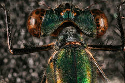 damsell fly
