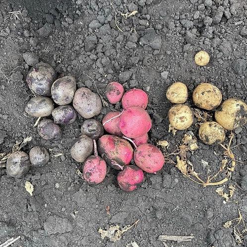 New potato mix