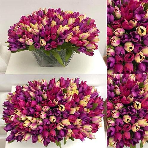 Purple Mix Tulip XL