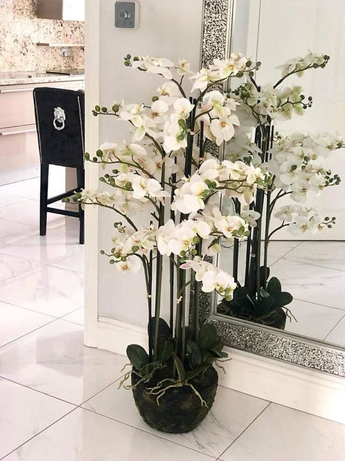 XL Orchid 140cm
