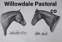 Willowdale-pastoral-co.jpg