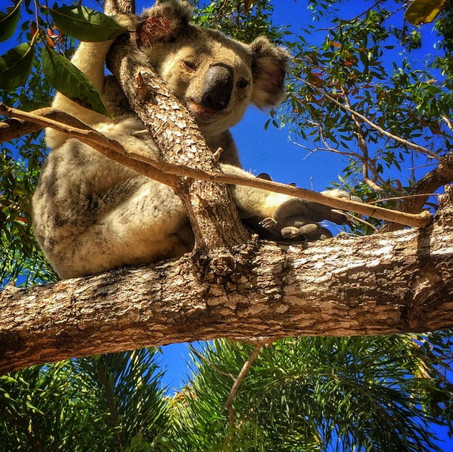 PORT: Townsville