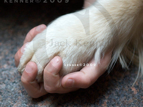 Paw n Hand