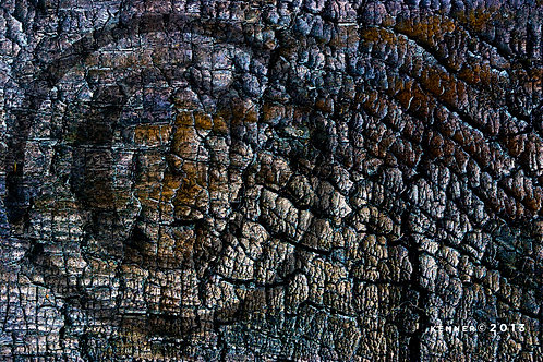 20540 Abstract