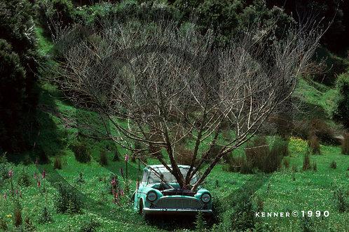 Tree n Car, New Zealand