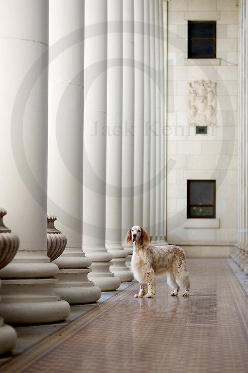 Canine Columns