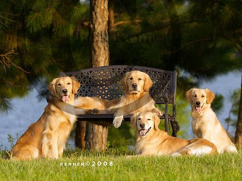 Golden Family Portrait