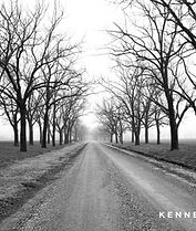 Walnut trees in winter in Arkansas delta.