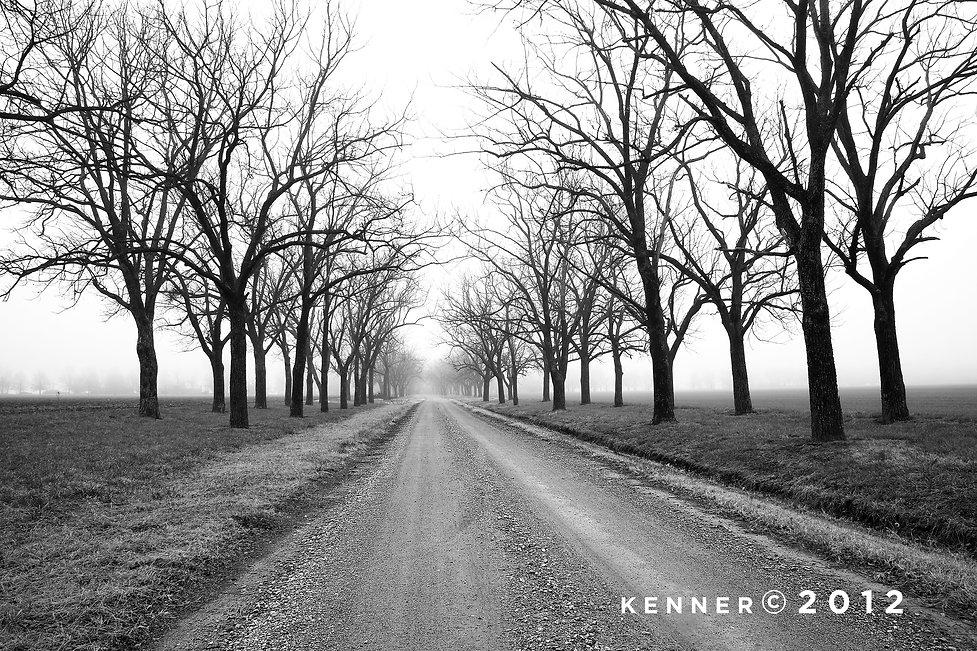 Wallnut trees in winter, Arkansas delta.