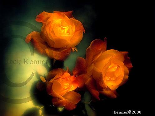 Three Orange roses