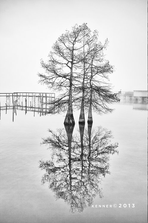 Three Cypress Tress and Pier Poles