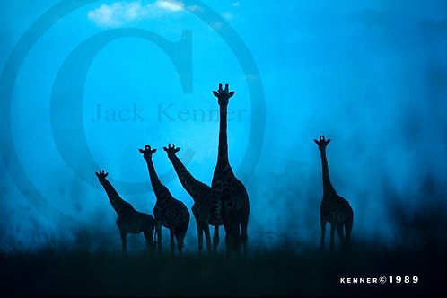 Giraffe Alert