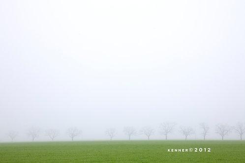 Walnut Trees in Winter Fog