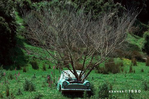Car & Tree
