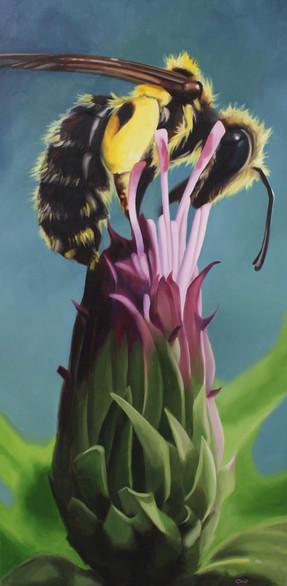 """""""Andrena's Thistle"""""""
