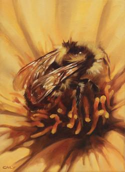 """""""Bumble Bee Dahlia"""""""